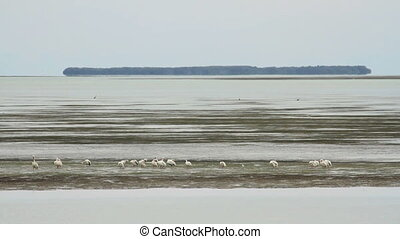 Storks in Bay - A flock of storks on a sandbar in the...