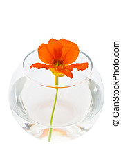 Decorative flowers in glass vase isolated over white...