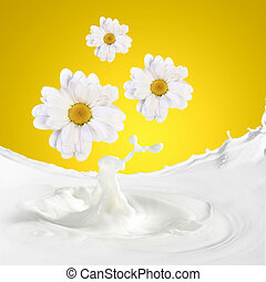 Fresh milk with camomile - Pouring white and fresh milk with...