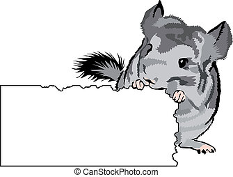 young Chinchilla nibbling on cardboard - add your own text