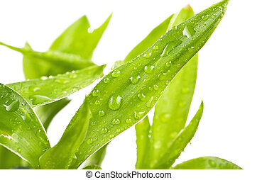 Fresh Bamboo with drops on white background
