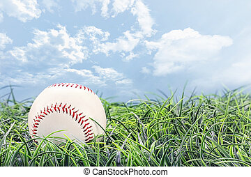 Baseball in Grass - Baseball in lying in the grass on a...