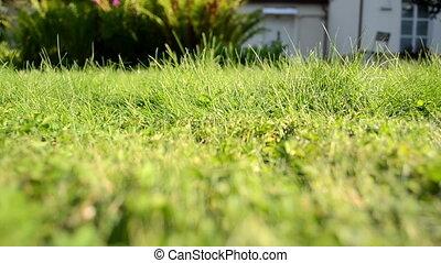 grass cut cutter worker