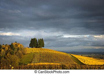 Autumn vineyards, Willamette Valley, Oregon - Changing...