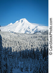 Mt. Hood, winter, Oregon - Mount Hood covered in winter...