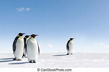 Penguins - Emperor Penguins in Antarctica