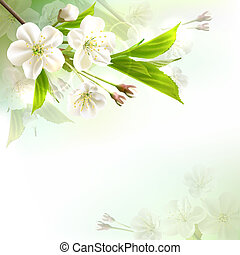 Blossoming tree branch with white flowers on bokeh green...