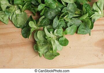 Green Cornsalad - Green cornsalad mache salad lettuce field...