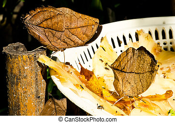 leaf butterfly (Kallima inachus)