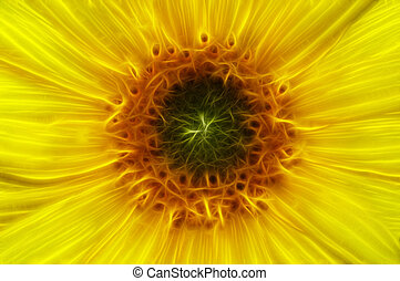 bloom - Abstract image of the bloom of sunflower