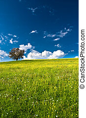 single tree on bright meadow and blue sky in spring