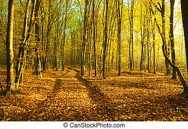 autumn forest - Sunbeams pour into the autumn forest