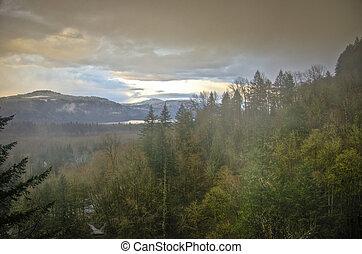 Autumn forest, Columbia River Gorge, Oregon
