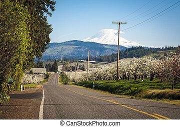 Rural road, Mt. Adams - Rural road through Hood River...