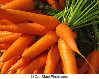 Farm Fresh Carrots - Background of fresh and luscious raw...