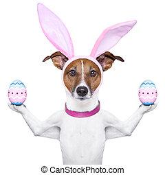 有趣, 復活節, 狗