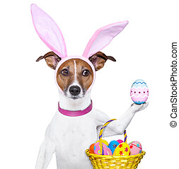 funny easter dog - dog dressed up as bunny with easter...
