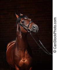 portrait of beautiful sportive horse with sense of humor at...