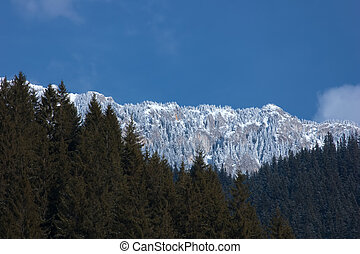 mountain peaks panorama and conifer - mountaineering and...