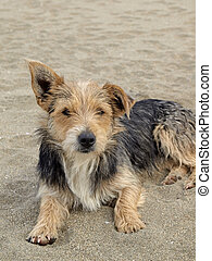 Young dog on the beach, Italy - Young dog on the beach, San...