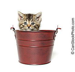 Kitten in a pale - Cute baby tabby kitten sitting inside of...