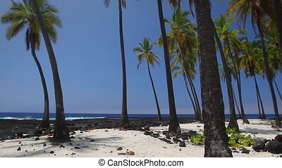 Hawaiian Paradise - Beautiful Hawaiian scene with palm trees...