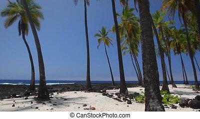 Hawaiian Paradise - Beautiful Hawaiian scene with palm trees...
