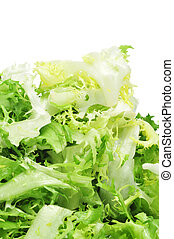 escarole endive - some chopped leaves of escarole endive on...