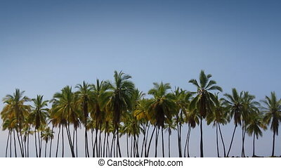 Palm Tree Lineup - Abstract composition of a forest of palm...