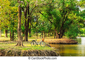 bicycles under big tree in the park