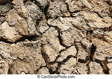 Dry Mud Texture