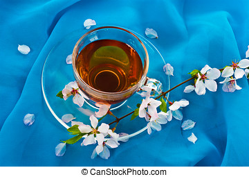 Tea and blossom cherry branch