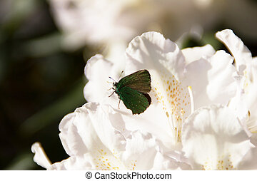 Beautiful butterfly on a rhododendron