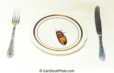 plate with cockroach on white - white plate with cockroach...