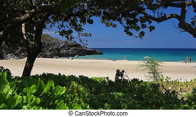 Tropical Beach Through Foliage