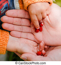 Child taking strawberry from father's hand