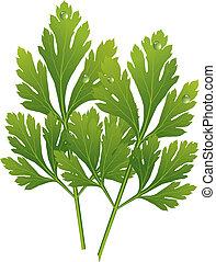 vector parsley