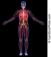 Anatomy of the human body - All human body systems