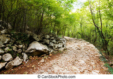 Forest trail - Rocky trail in the forest of Velebit national...