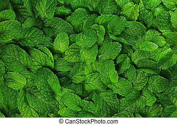 Mint leaves background. - Close-up background fresh mint...