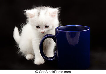beautiful little white kitten sitting near big blue cup