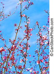 spring flowers of a tree in spring against blue sky