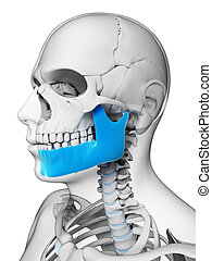 Highlighted - jaw bone - 3d rendered illustration - jaw bone
