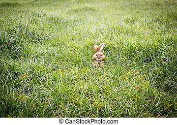 Chocolate bunny hiding in the grass - Cute chocolate bunny...