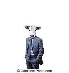 negócio, homem, touro, cabeça