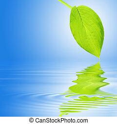 Hosta Leaf Reflection - Hosta leaf with reflection over...