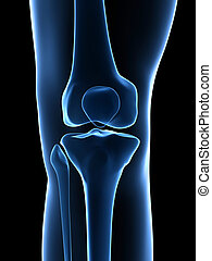 Knee anatomy - 3d rendered illustration - knee anatomy