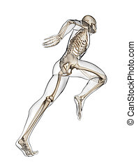 Runner anatomy - 3d rendered illustration - runner anatomy