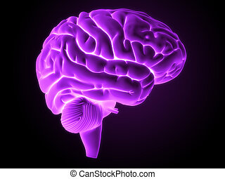 Human brain - 3d rendered illustration - brain