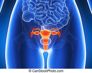 Highlighted uterus - 3d rendered illustration - uterus